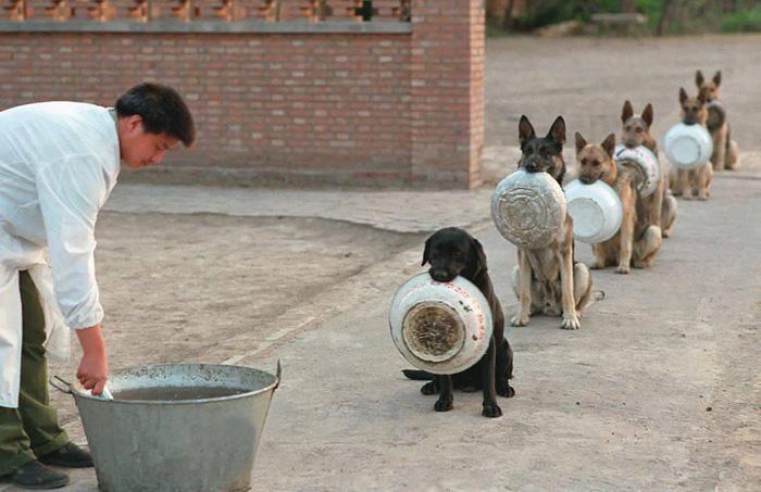 Psy v Číne čakajú na jedlo disciplinovanejšie, ako ľudia