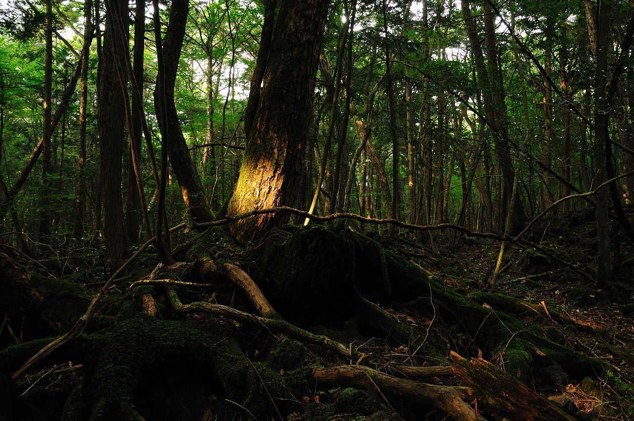 MIESTA HROZY: Aokigahara, miesto, kde je každý rok nájdených vyše 100 mrtvol!
