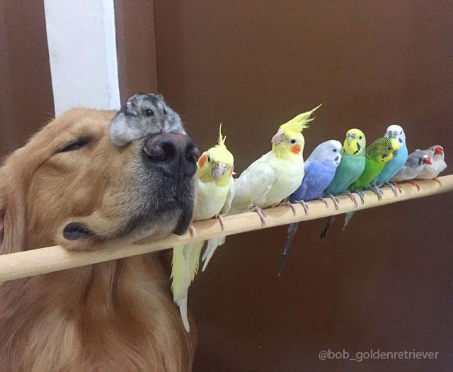 Jedna veľká zvieracia rodinka: pes, 8 vtákov a škrečok.
