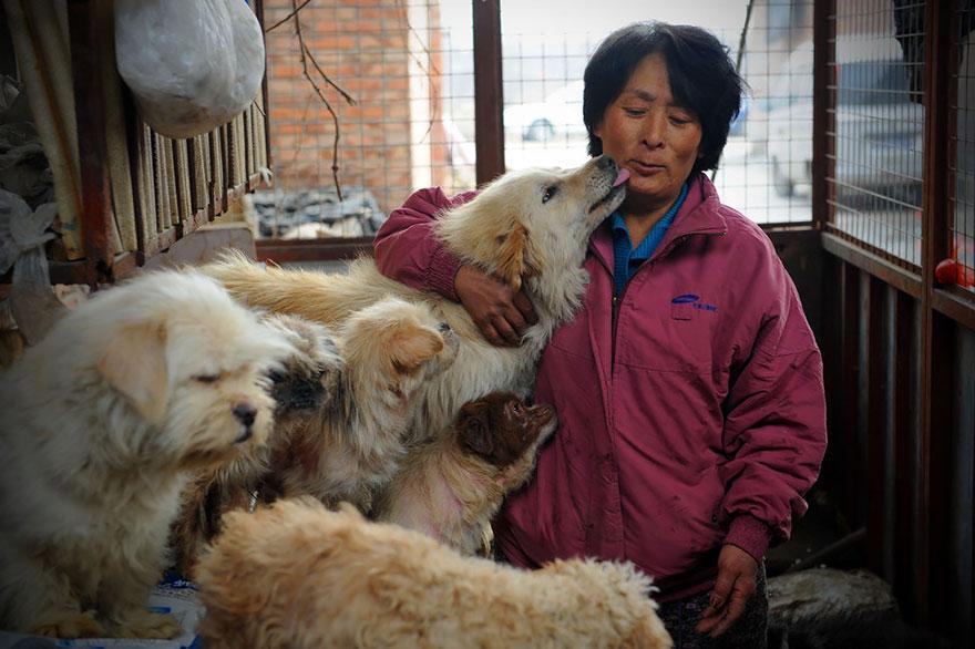 Žena prešla 2 400 km a minula viac ako 990 € aby zachránila psov pred zjedením