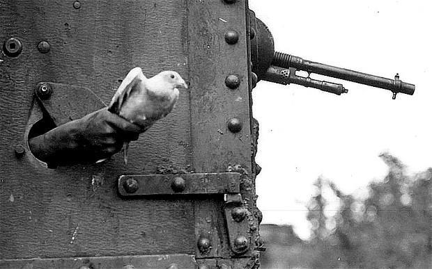 Zvieratá ako vojnoví hrdinovia