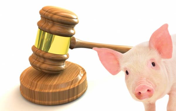 TOP 10 najpodivnejších zákonov sveta!