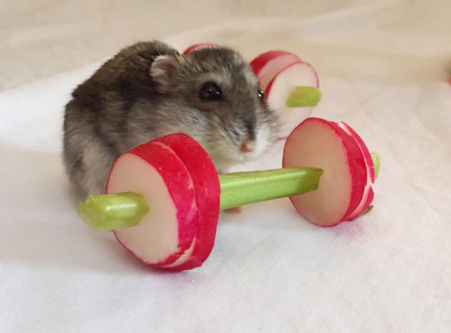 Videli ste už škrečky cvičiť? Pozrite si posilňovňu, ktorá je zo zeleniny!