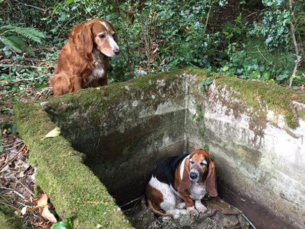 Pes strávil týždeň čakaním na pomoc. Z tejto oddanosti by sme si mali brať príklad!