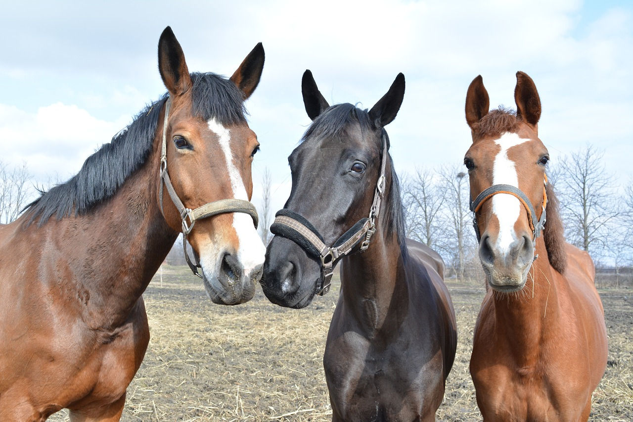 Divoké kone je nezábavná melancholická kopa hnoja – blog
