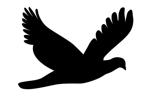 Pristrihnite mi krídla, prosím …  – blog