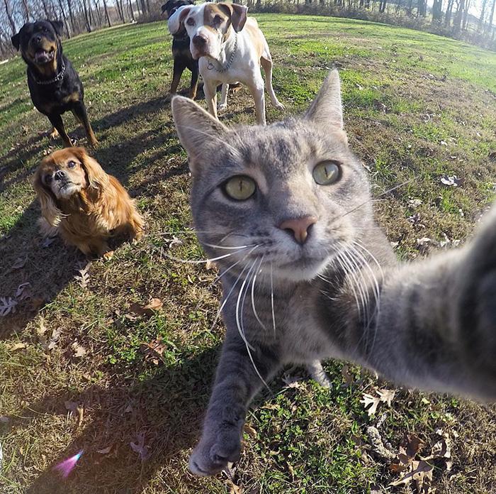Kocúr zrodený pre selfie. Má lepšie fotky ako Vy!