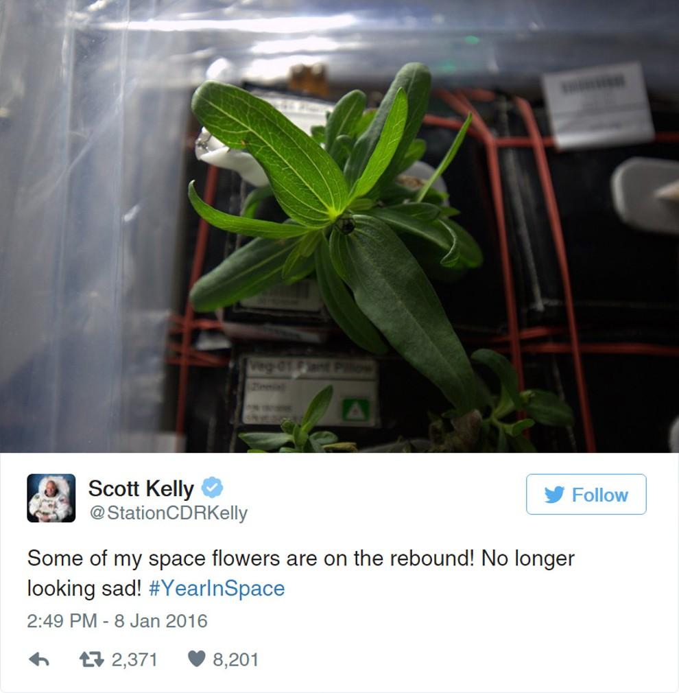 Astronaut dokázal nemožné, vo vesmíre vypestoval kvetinu