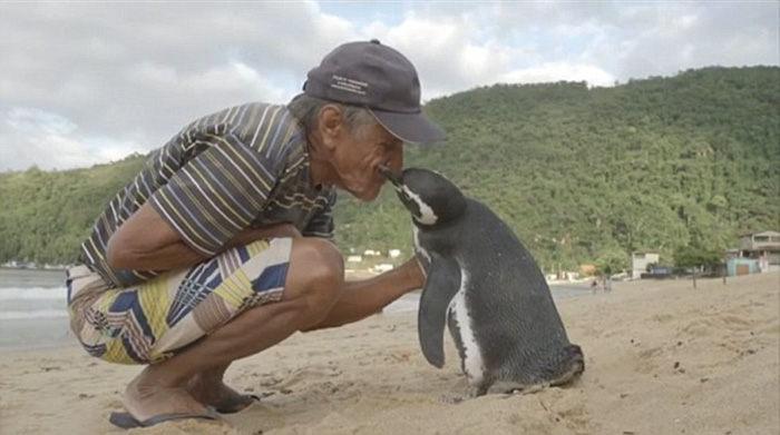 Tučniak, každý rok prepláva viac ako 8 000 km aby sa stretol s mužom, ktorý mu zachránil život!