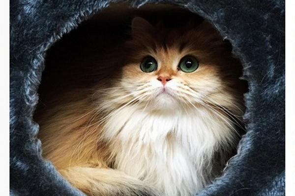 Zoznámte sa so Smoothie. Najfotogenickejšou mačkou na svete!