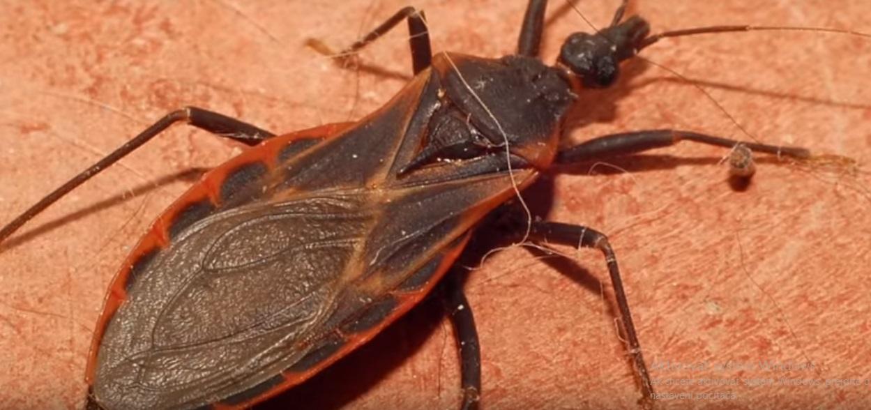 Od tohto hmyzu radšej bež preč! Je nebezpečnejší, ako sa zdá!
