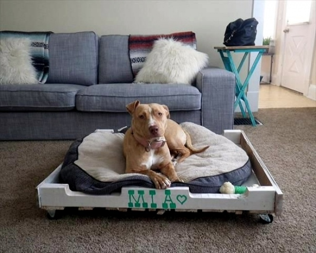 3045605-make-great-dog-beds-from-euro-pallets-themselves-dog-beds-made-of-wood-2-6371-650-81251b8130-1467729526