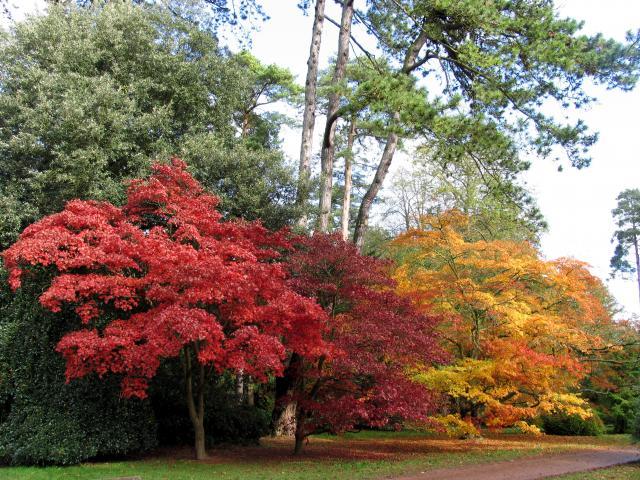 Prečo sú stromy na jeseň v Amerike farebnejšie ako v Európe?