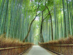 arashiyama-bamboo-forest-kyoto-cr-getty