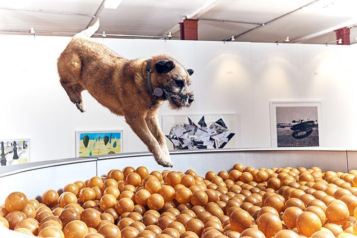 Prvá výstava umenia pre psov pobaví nejedného z vás!