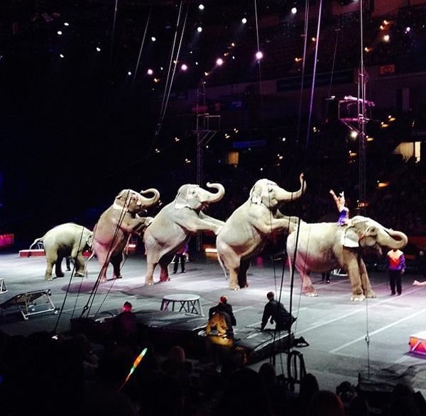 Po týchto fotkách si už lístok do cirkusu nekúpiš: Takto sa drezúrujú slony