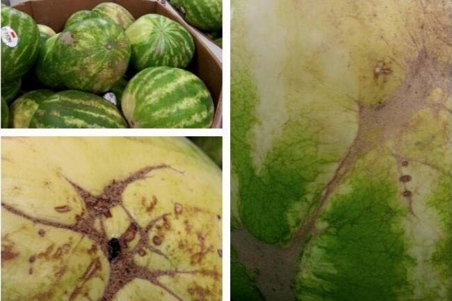 Ako si vybrať správny melón? Poradia vám nasledujúce tipy od skúsených farmárov