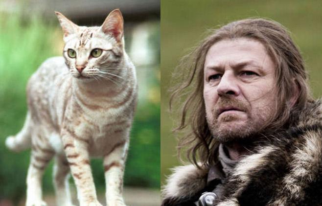 Postavy z Game of Thrones majú svojich mačacích dvojníkov. Kto sa podobá najviac?