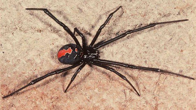 Tento muž je smoliar roka! Neuveríte, kam ho uhryzol jedovatý pavúk!