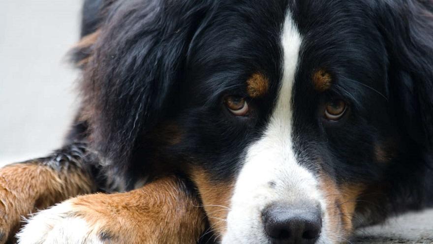 Dokážu psy rozpoznať smrť? Prečo niekedy čakajú pri hrobe na svojho majiteľa?