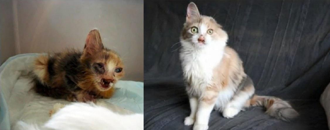 Zúbožené mačiatko dospelí obchádzali, zachránilo ho 7-ročné dievčatko! Takto sa mačička zmenila v starostlivosti malej záchrankyne