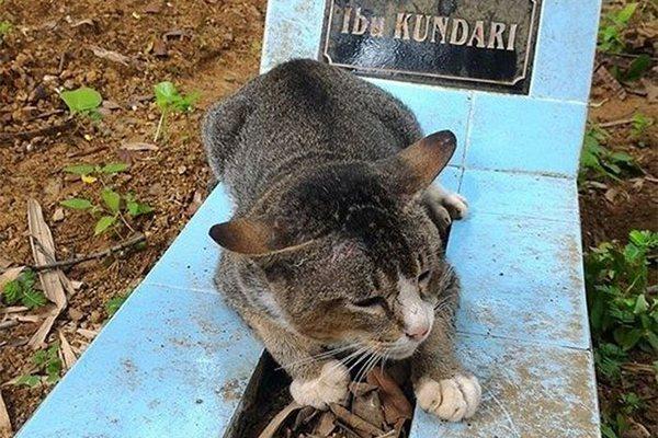 Niektoré mačky sú veľmi citlivé! Táto napríklad strávila jeden rok pri hrobe svojej majiteľky
