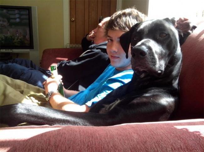 Pozrite sa na zopár roztomilých fotografií psíkov, ktorí si o sebe myslia, že sú ľudia