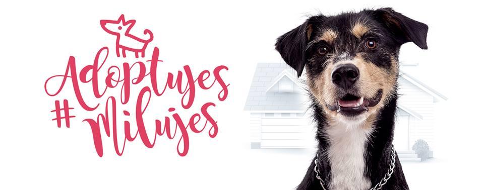 Chceš na Vianoce psíka? Nekupuj ho, adoptuj ho! Skvelú kampaň podporili aj známe tváre!