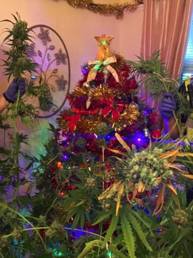 Keď si ozdobíš stromček marihuanou, Vianoce sú veľmi veselé. Až do určitého momentu…
