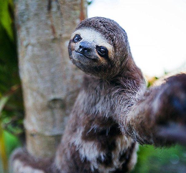Selfie mánii podľahli už i zvieratká! Výsledok skutočne stojí za to