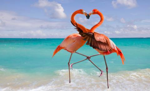 Láska je všade naokolo. Sleduj tieto láskyplné fotografie Matky prírody