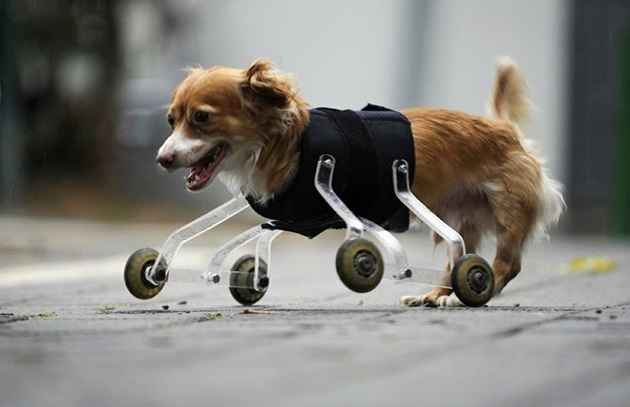 Tieto zvieratká nemali ľahký osud, no aj napriek handicapu dnes žijú šťastne…