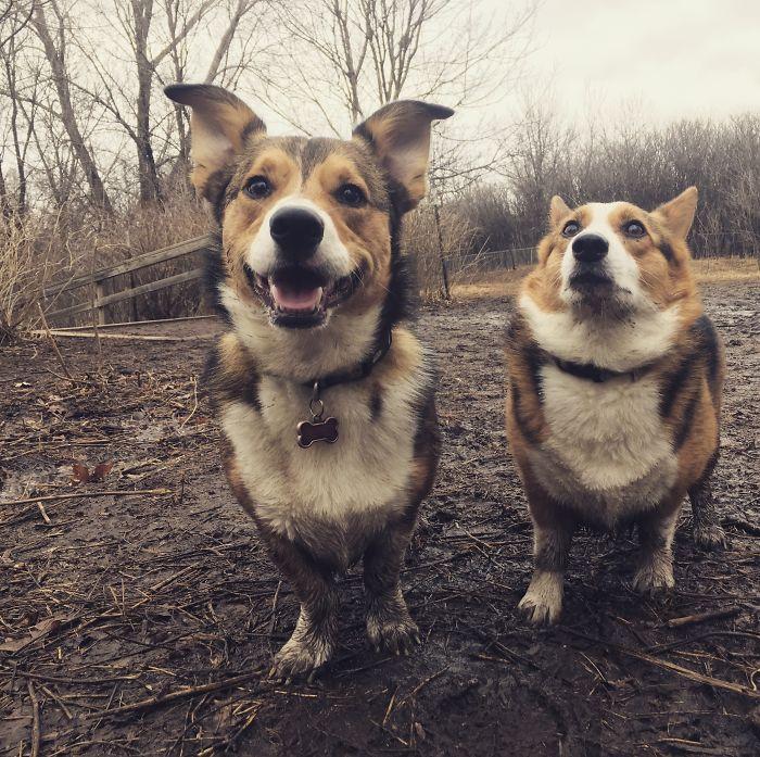 Toto je zopár vtipných dôvodov, prečo by venčenie psíkov v upršanom počasí malo ísť bokom