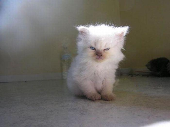 Pozrite sa na zopár roztomilo naštvaných mačiek, ktoré až veľmi pripomínajú nahnevaných malých ľudí. O zábavu máte postarané