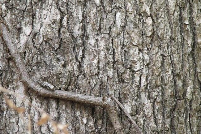 Len 1 z 10 dokáže nájsť na obrázku schovanú žabu. Si tým šikovným práve ty? Teraz to môžeš zistiť!