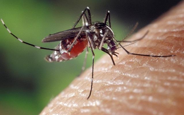 Sezóna komárov je tu! Ako sa efektívne zbaviť svrbenia štípancov?!