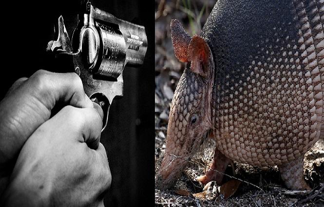 Kandidát na Darwinovu cenu: Chcel zastreliť pásavca, skončil s prestrelenou hlavou