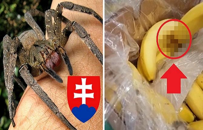 Slovenka zažila na nákupe v Lidli šok! Medzi banánmi objavila jedovatého pavúka