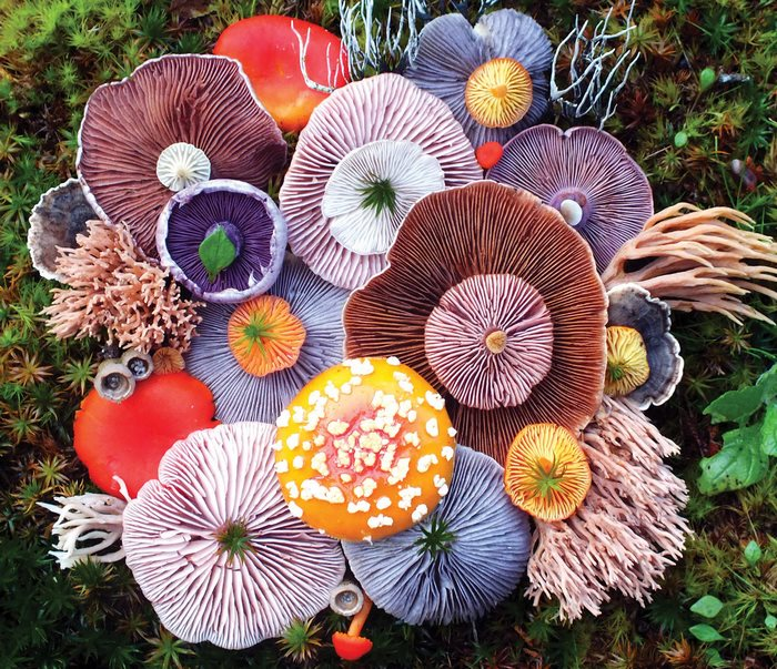 Prenádherné huby na Islande si zamiluje aj ten, kto huby neznáša. Toto sú umelecké diela prírody