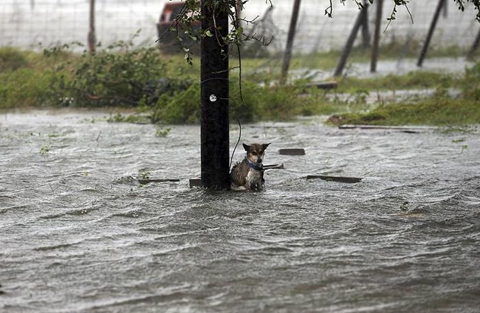 Hrôzostrašné zábery z Texasu, ktorý ovládol hurikán menom Harvey. Ľudia sa o svoje nepekné fotografie z miesta podelili s internetom