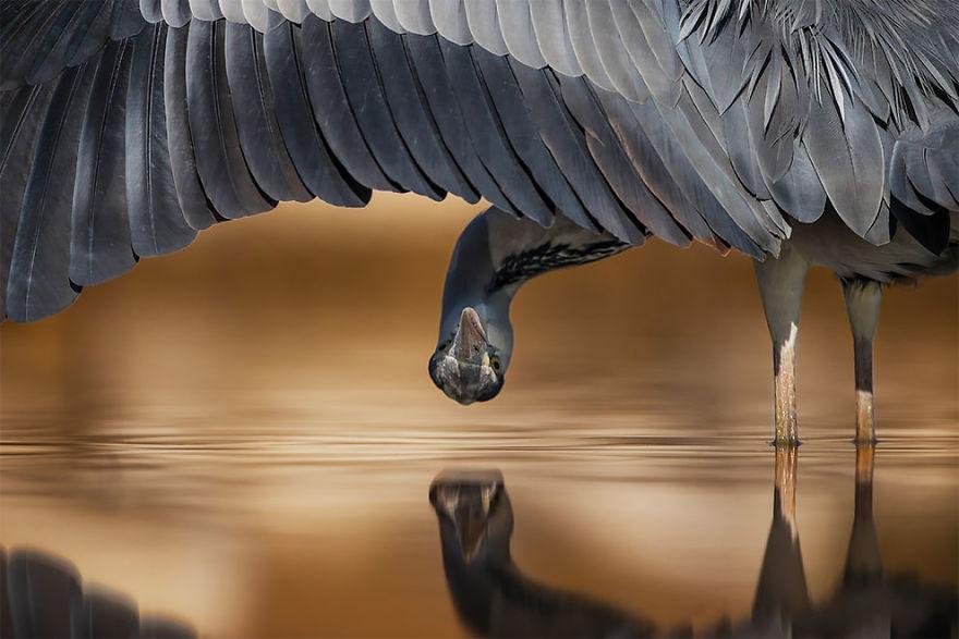 Milovníci umeleckých fotografií pozor! Prinášame vám tie najkrajšie fotky z ríše vtákov