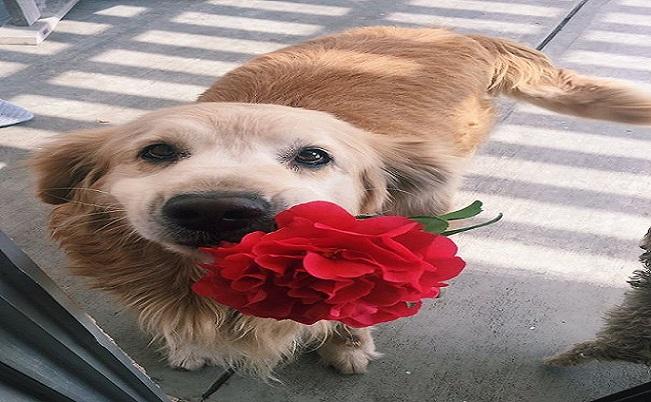 Aj zviera dokáže obdarovať. Okrem obrovskej lásky dávajú niekedy aj milé, hmotné veci