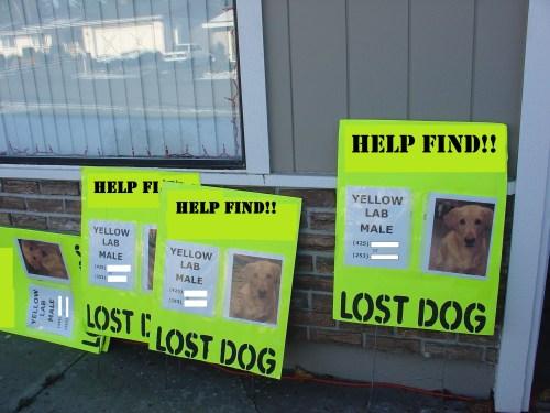 Stratil sa vám psík? Vieme, ako ho nalákať späť pomocou týchto dokonalých trikov