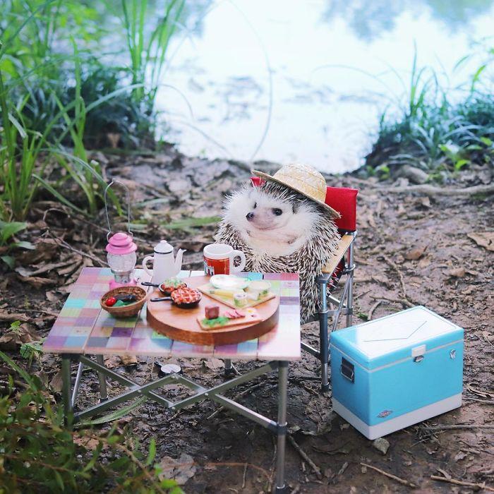 Milovníci ježkov do pozoru! Svezoznámy Azuki je opäť na cestách, tentokrát sa rozhodol kempovať
