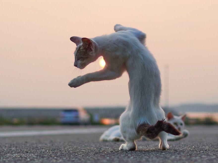 Japonský fotograf sa rozhodol ukázať ľuďom, že roztomilé mačky ovládajú viac bojových umení ako samotní ninjovia