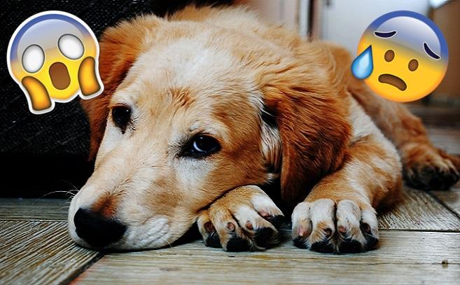 V európskej krajine prekvitá odporný obchod so zvieratami! Na psíkoch tam páchajú takéto ohavnosti
