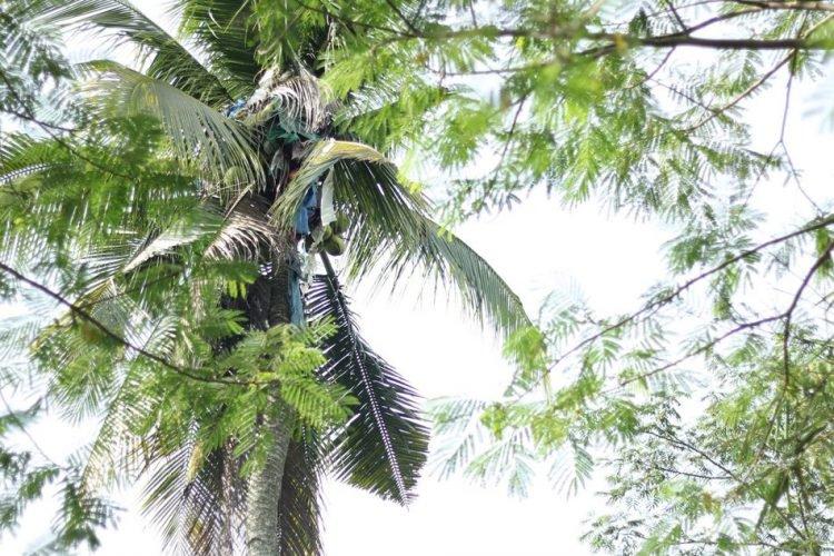 Celé tri roky žil na strome. Prečo to robil a ako plánuje pokračovať vo svojom živote?