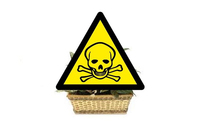 Izbová rastlina, ktorú pestujú doma stovky Slovákov zabíja! Zbavte sa jej, kým nie je neskoro