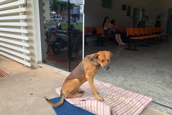 Tento psík čakal pred nemocnicou 4 mesiace. Keď zistíte dôvod, neubránite sa slzám!