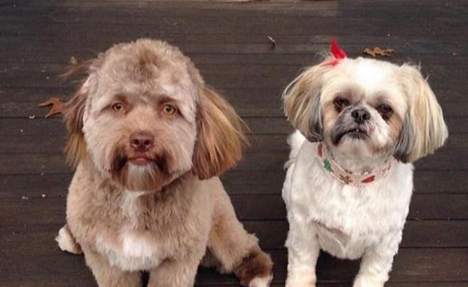Jedni sa ho boja, iní obdivujú: Na internete sa objavil pes s ľudskou tvárou